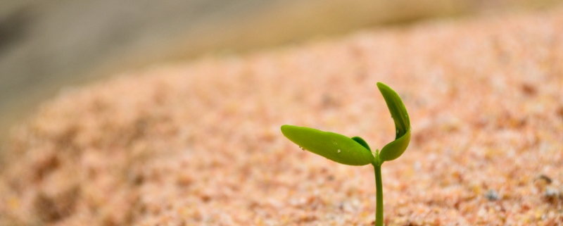 Helping to grow your rental business